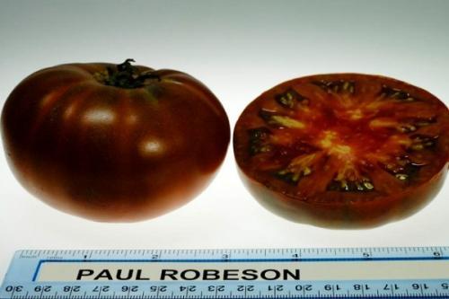 Описание сорта томата Поль робсон. Крепкий и устойчивый сорт — томат Поль Робсон: полное описание помидоров и их характеристики