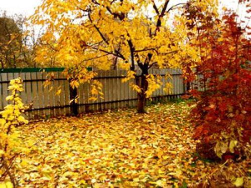 Чем люди занимаются осенью в огороде и в садах. Что делают люди осенью.