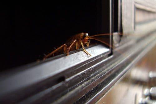 От чего умирают тараканы. Чего не любят тараканы