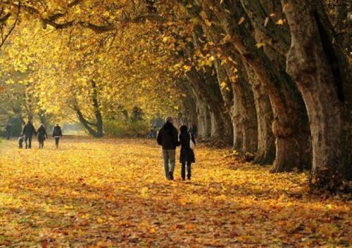 Что делают осенью. 30 дел, которые надо успеть сделать осенью